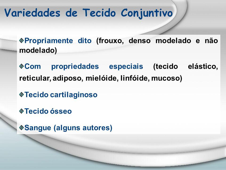 Córtex da Glândula Adrenal
