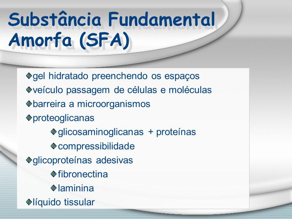 Substância Fundamental Amorfa (SFA) gel hidratado preenchendo os espaços veículo passagem de células e moléculas barreira a microorganismos proteoglic