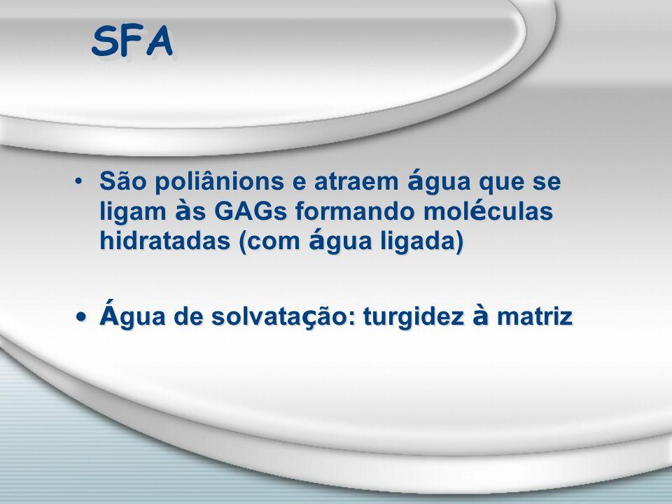 SFA São poliânions e atraem á gua que se ligam à s GAGs formando mol é culas hidratadas (com á gua ligada) Á gua de solvata ç ão: turgidez à matriz Sã