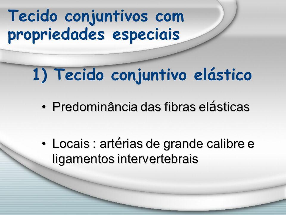 Tecido conjuntivos com propriedades especiais Predominância das fibras el á sticas Locais : art é rias de grande calibre e ligamentos intervertebrais