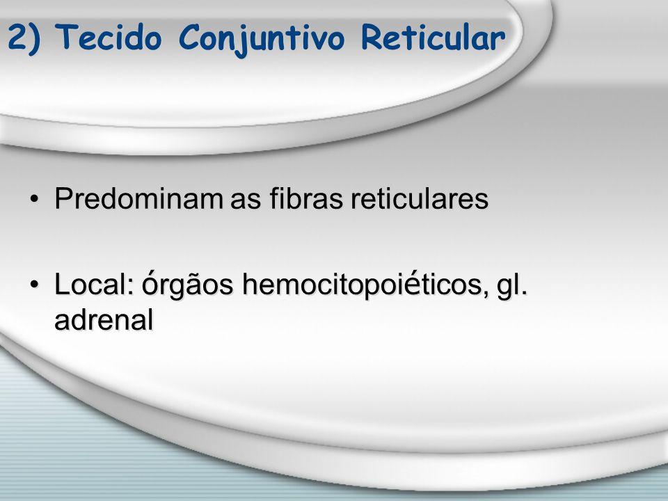 2) Tecido Conjuntivo Reticular Predominam as fibras reticulares Local: ó rgãos hemocitopoi é ticos, gl. adrenal Predominam as fibras reticulares Local