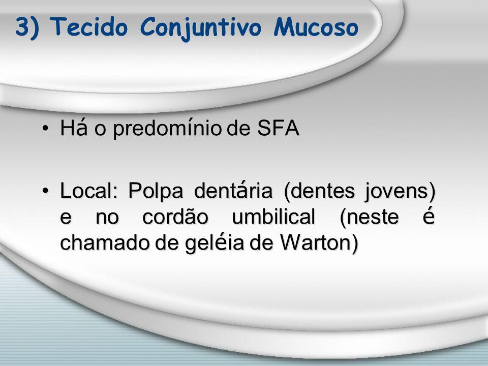 3) Tecido Conjuntivo Mucoso H á o predom í nio de SFA Local: Polpa dent á ria (dentes jovens) e no cordão umbilical (neste é chamado de gel é ia de Wa