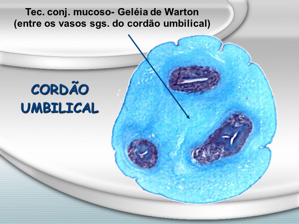 Tec. conj. mucoso- Geléia de Warton (entre os vasos sgs. do cordão umbilical) CORDÃOUMBILICAL