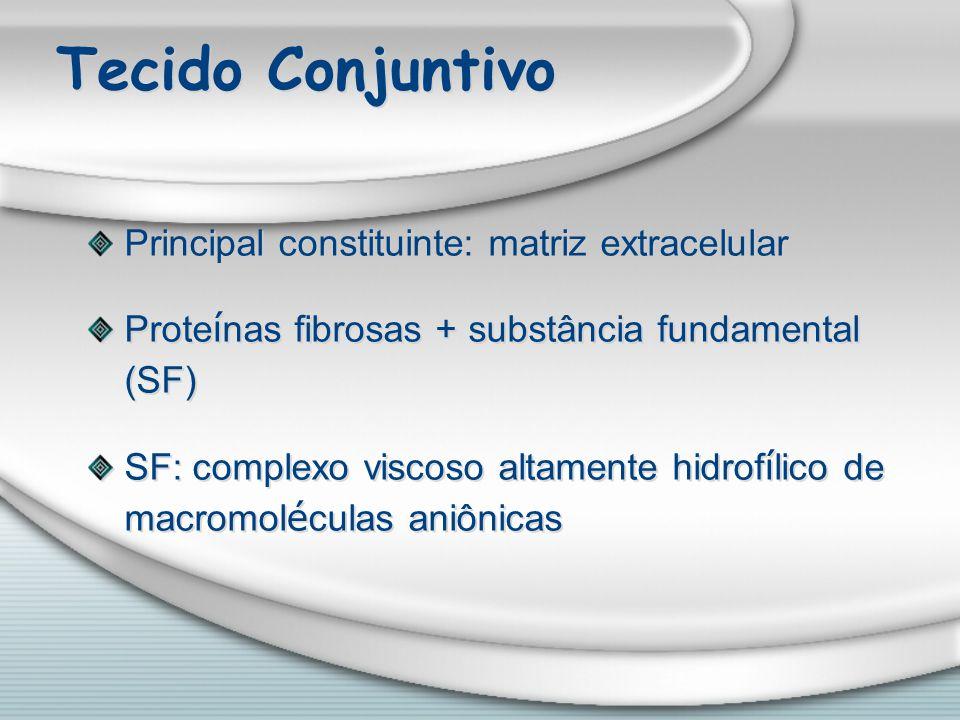 Tecido Conjuntivo Principal constituinte: matriz extracelular Prote í nas fibrosas + substância fundamental (SF) SF: complexo viscoso altamente hidrof