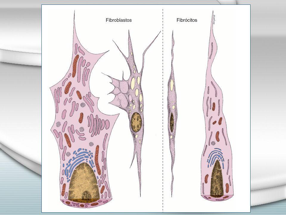 Elásticas Cedem e retornam à forma anterior Artérias, pulmões, ligamentos, orelha Cedem e retornam à forma anterior Artérias, pulmões, ligamentos, orelha