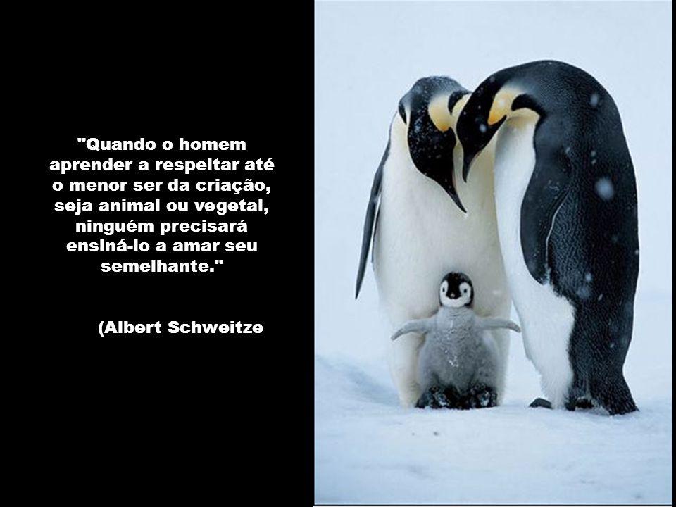 Não devemos ter medo de inventar seja o que for. Tudo o que existe em nós existe também na natureza, pois fazemos parte dela. Pablo Picasso