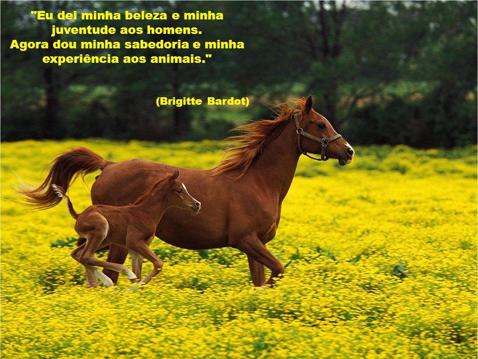 Nós seres humanos, estamos na natureza para auxiliar o progresso dos animais, na mesma proporção que os anjos estão para nos auxiliar.