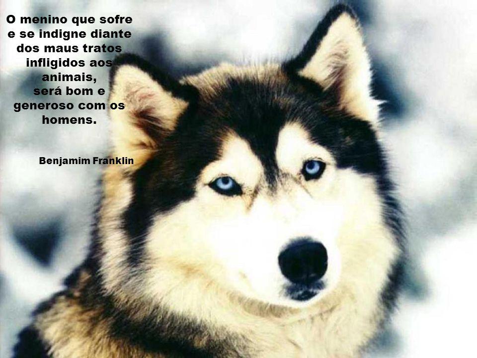 Antes de ter amado um animal, parte da nossa alma permanece desacordada. Anatole France
