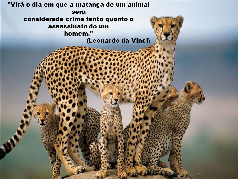 Virá o dia em que a matança de um animal será considerada crime tanto quanto o assassinato de um homem. (Leonardo da Vinci)