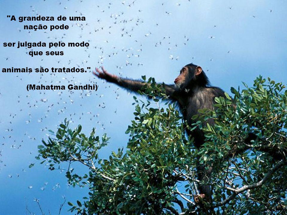 A grandeza de uma nação pode ser julgada pelo modo que seus animais são tratados. (Mahatma Gandhi)