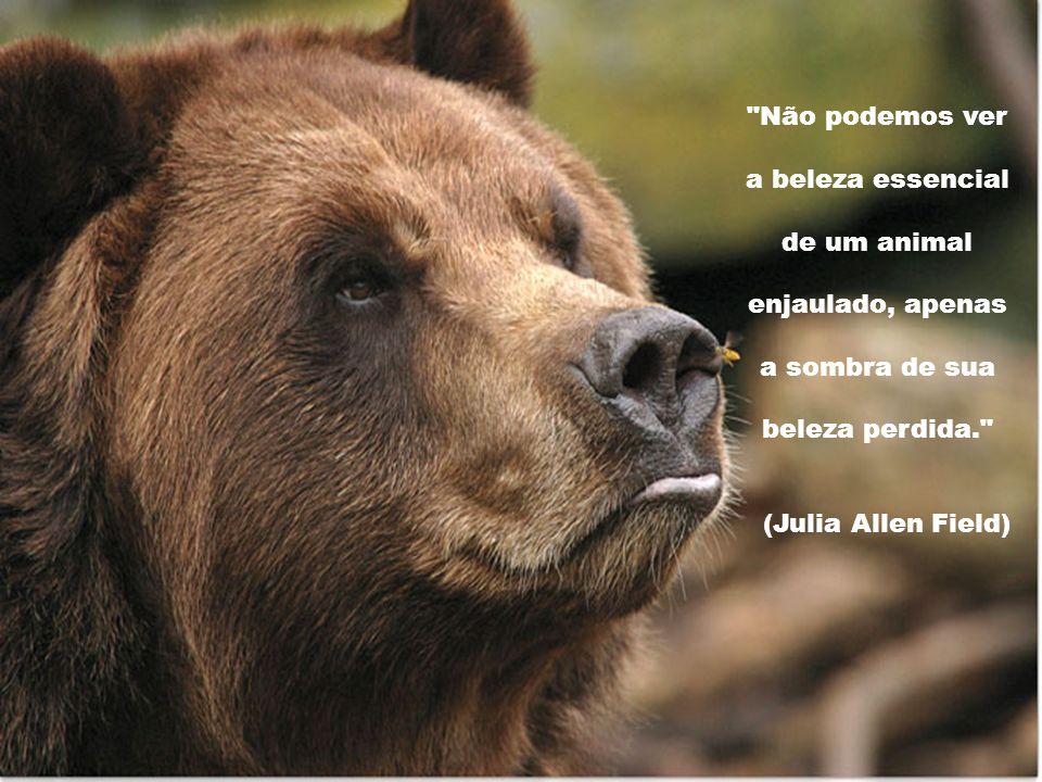 Não podemos ver a beleza essencial de um animal enjaulado, apenas a sombra de sua beleza perdida. (Julia Allen Field)