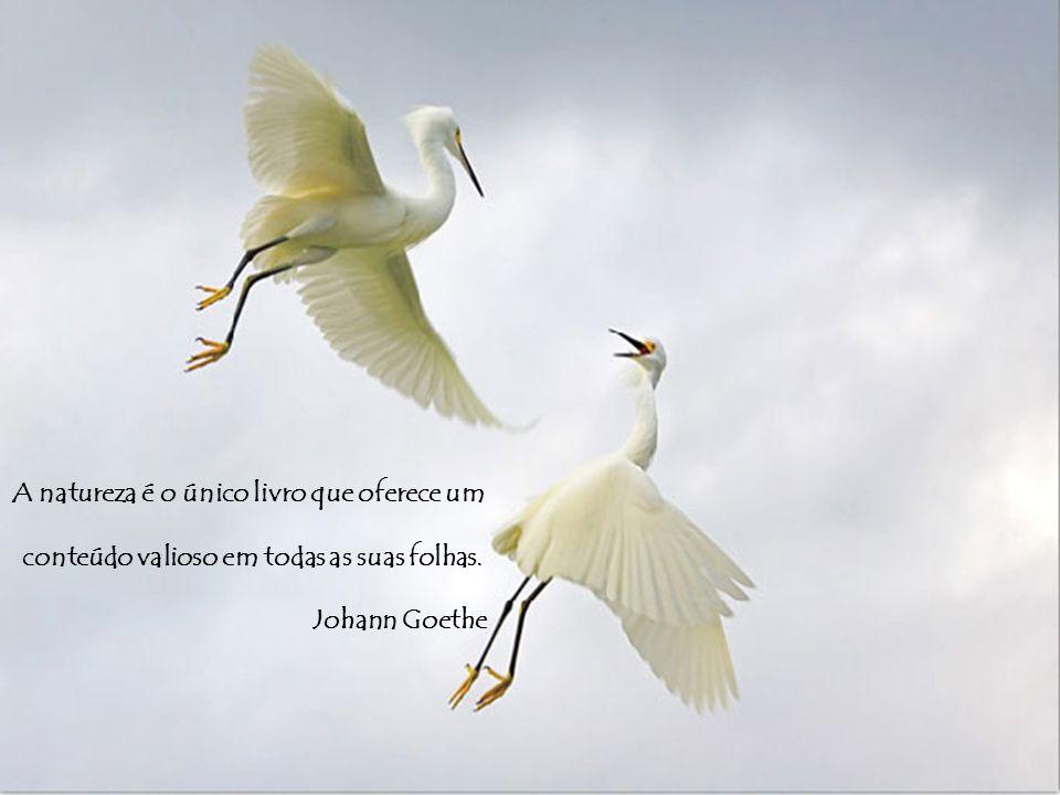 A natureza é o único livro que oferece um conteúdo valioso em todas as suas folhas. Johann Goethe