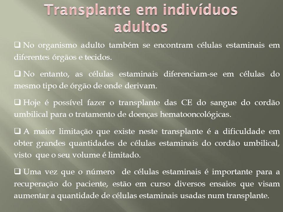  No organismo adulto também se encontram células estaminais em diferentes órgãos e tecidos.