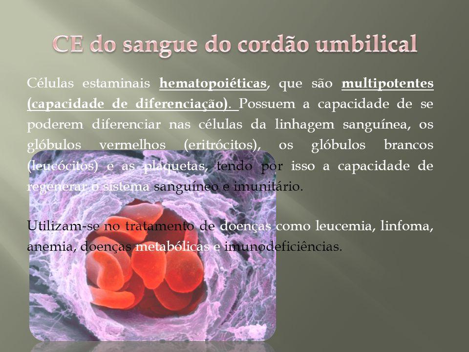 Células estaminais hematopoiéticas, que são multipotentes (capacidade de diferenciação).
