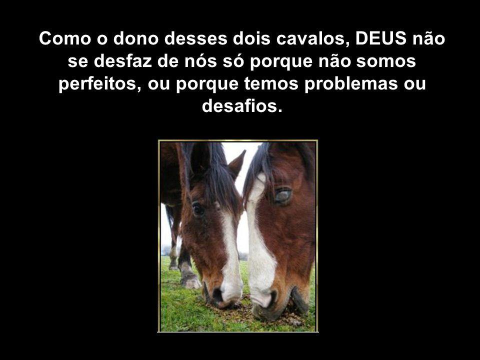 E o cavalo cego guia-se pelo som do sino, confiante que o outro o está levando para o caminho certo.