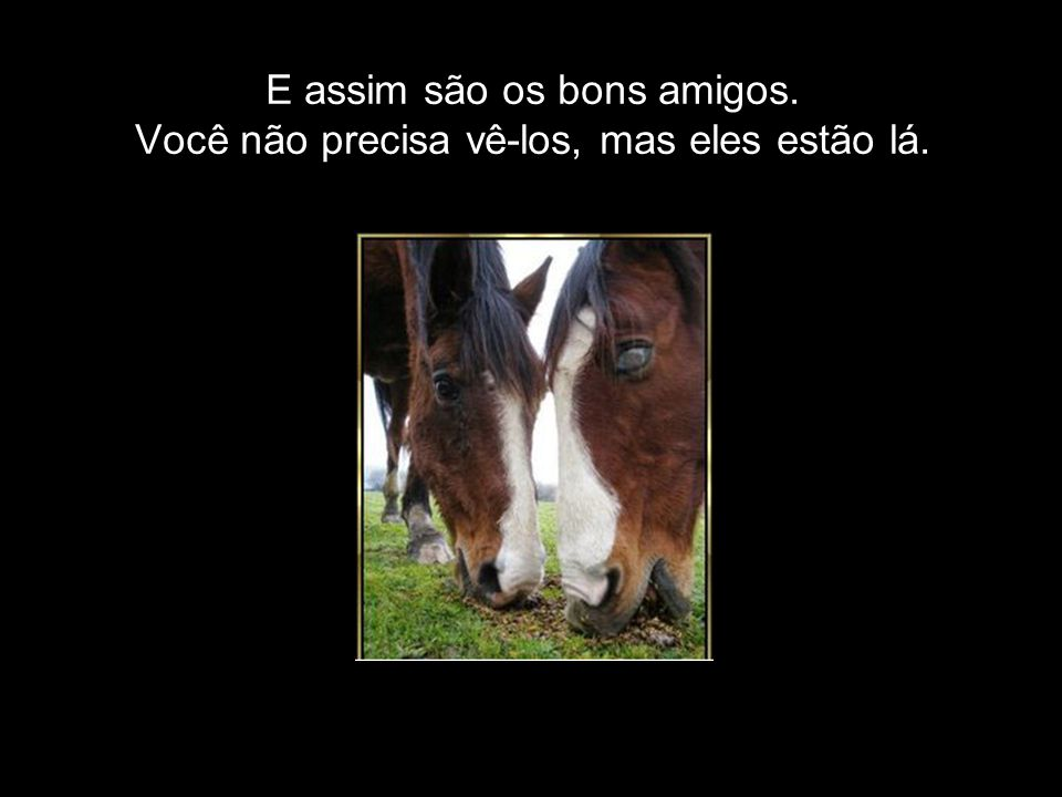 Algumas vezes somos o cavalo cego, guiado pelo som do sino daqueles que Deus coloca em nossas vidas.