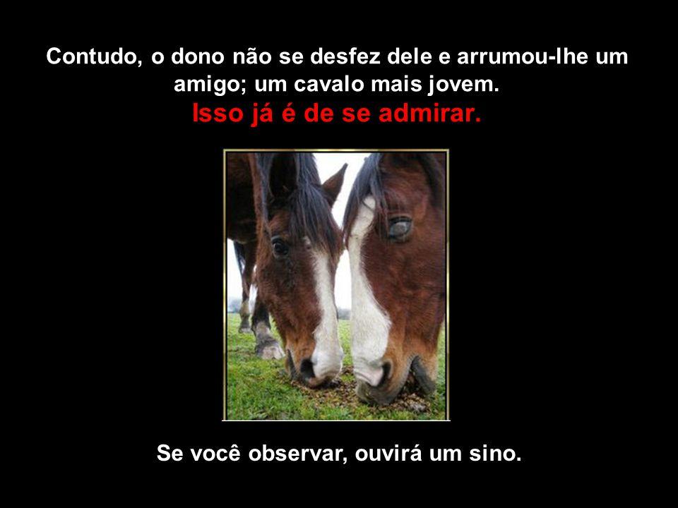 Contudo, o dono não se desfez dele e arrumou-lhe um amigo; um cavalo mais jovem.