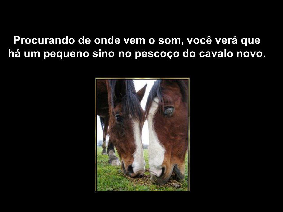 Contudo, o dono não se desfez dele e arrumou-lhe um amigo; um cavalo mais jovem. Isso já é de se admirar. Se você observar, ouvirá um sino.