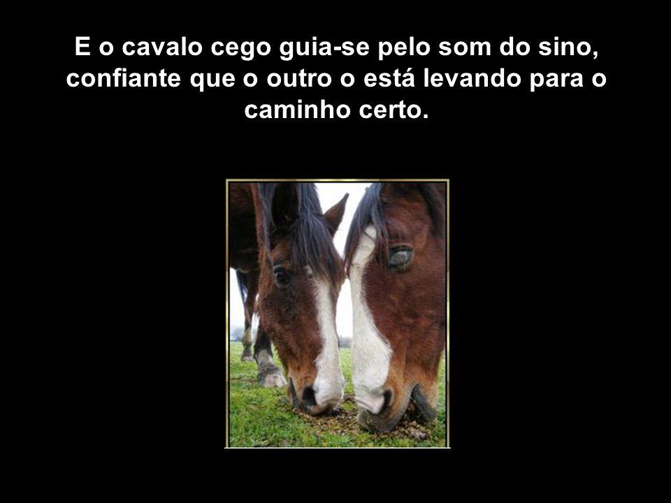 E você percebe que o cavalo com o sino está sempre olhando se o outro o acompanha e, às vezes pára, dando um tempo para que o outro possa alcançá-lo.