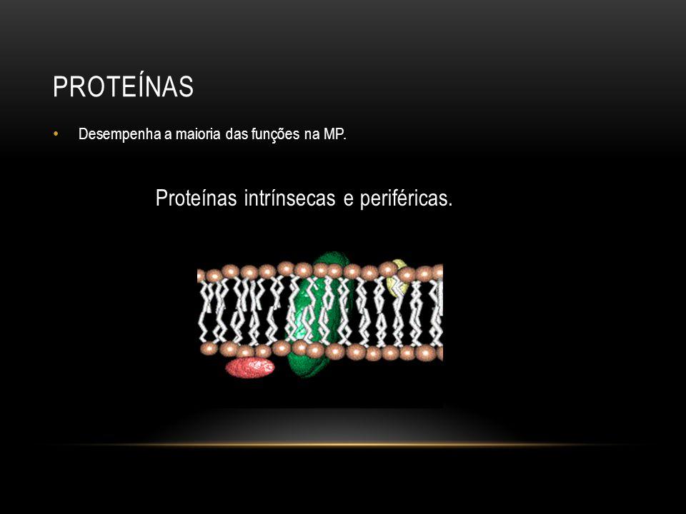 PROTEÍNAS Desempenha a maioria das funções na MP. Proteínas intrínsecas e periféricas.