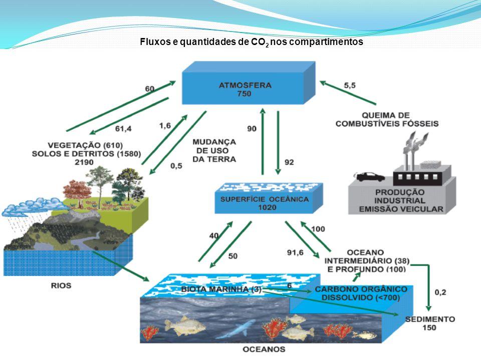 Fluxos e quantidades de CO 2 nos compartimentos