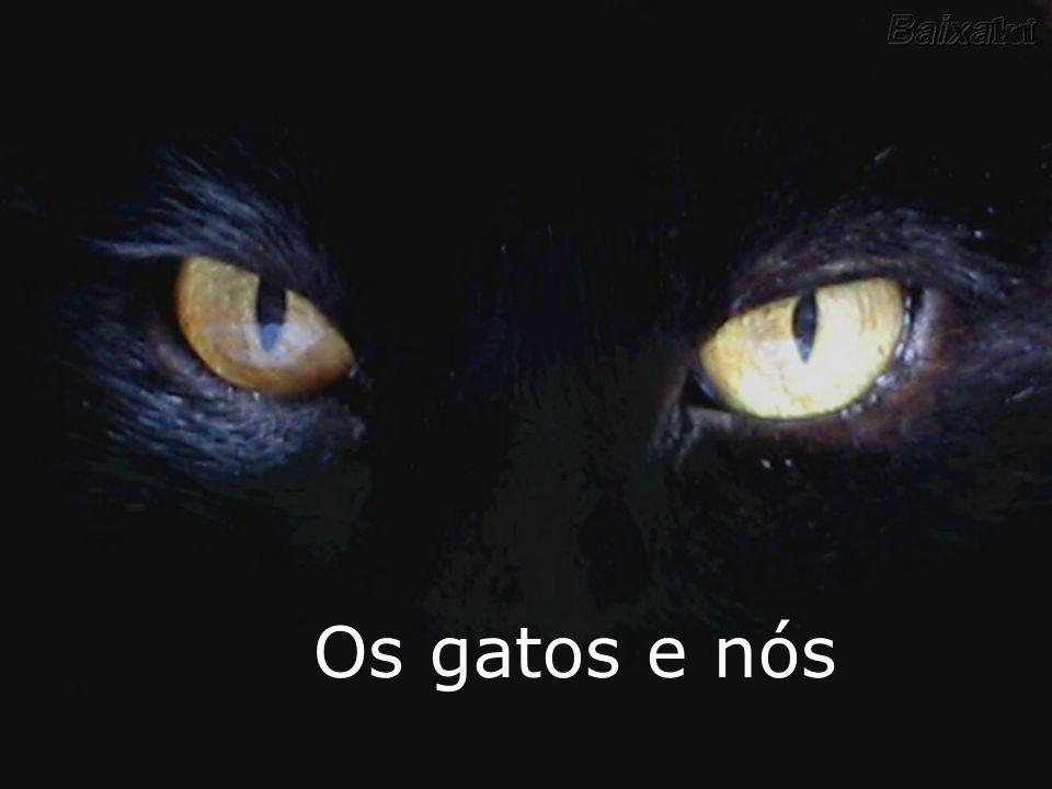Adote um gato,sua vida nunca mais será a mesma! Colaboração: Dr. Aderbal Bacchi Bergo