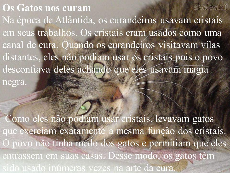 O gato veio a você por um motivo, desconhecido para você a nível físico, mas em sonhos você pode ver a razão para o aparecimento do gato nessa época,