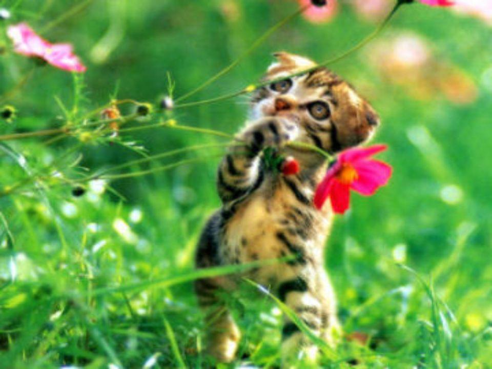 Os gatos são criaturas adoraveis,e amam seus donos acima de tudo,porem têm um jeito diferente de amar...mas nem por isso deixa de ser verdadeiro