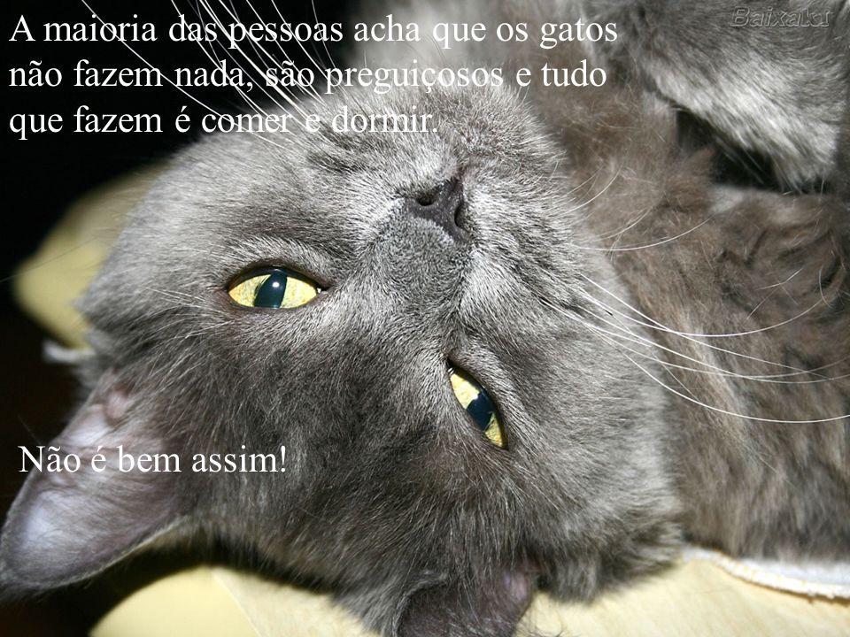 A maioria das pessoas acha que os gatos não fazem nada, são preguiçosos e tudo que fazem é comer e dormir.