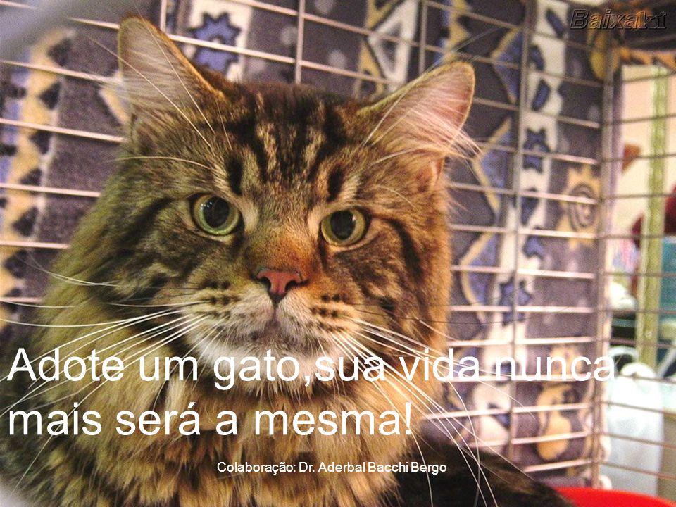 Pessoas alergicas a gatos são emocionalmente incapazes de amar alguem com profundidade, porque reprimem seus verdadeiros sentimentos!