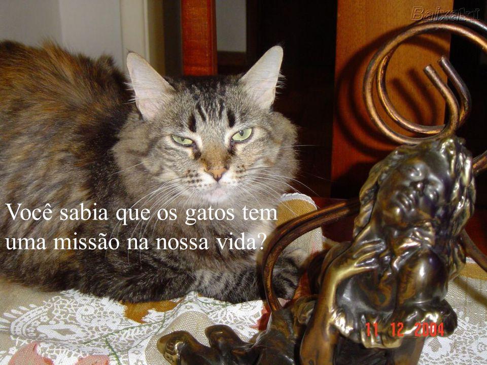 A maioria das pessoas acha que os gatos não fazem nada, são preguiçosos e tudo que fazem é comer e dormir. Não é bem assim!