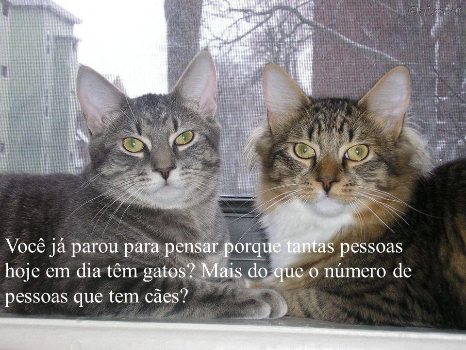 Você sabia que os gatos tem uma missão na nossa vida?