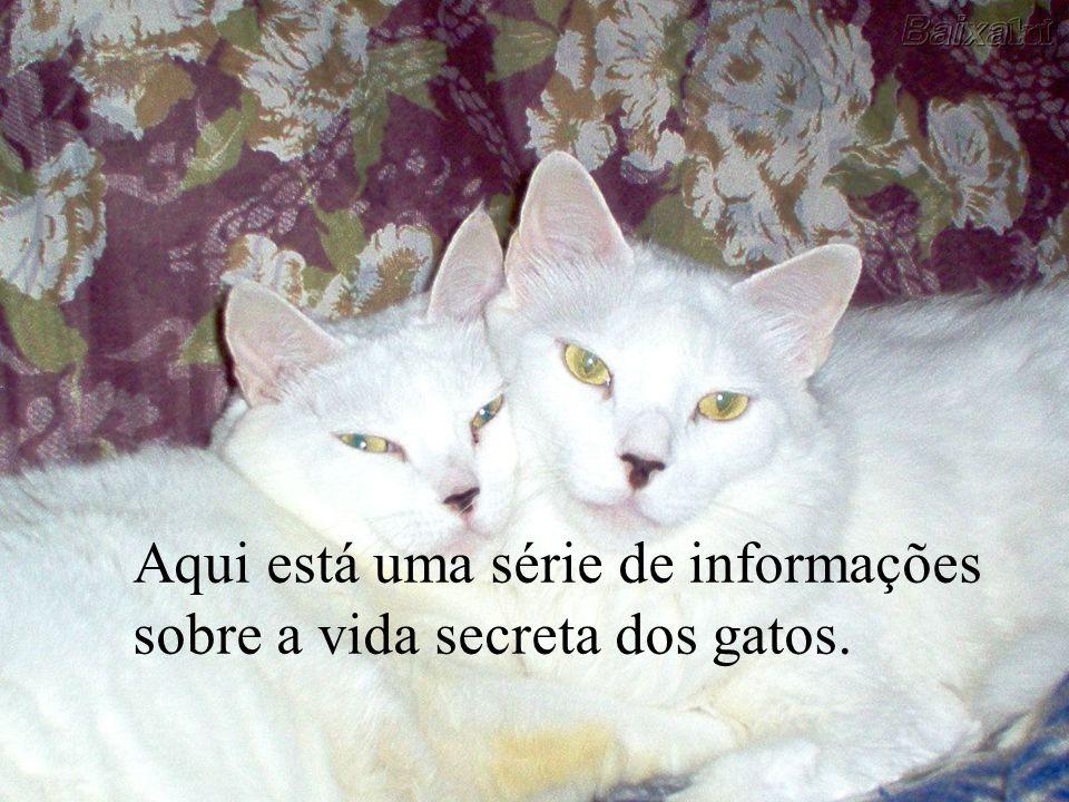 Aqui está uma série de informações sobre a vida secreta dos gatos.