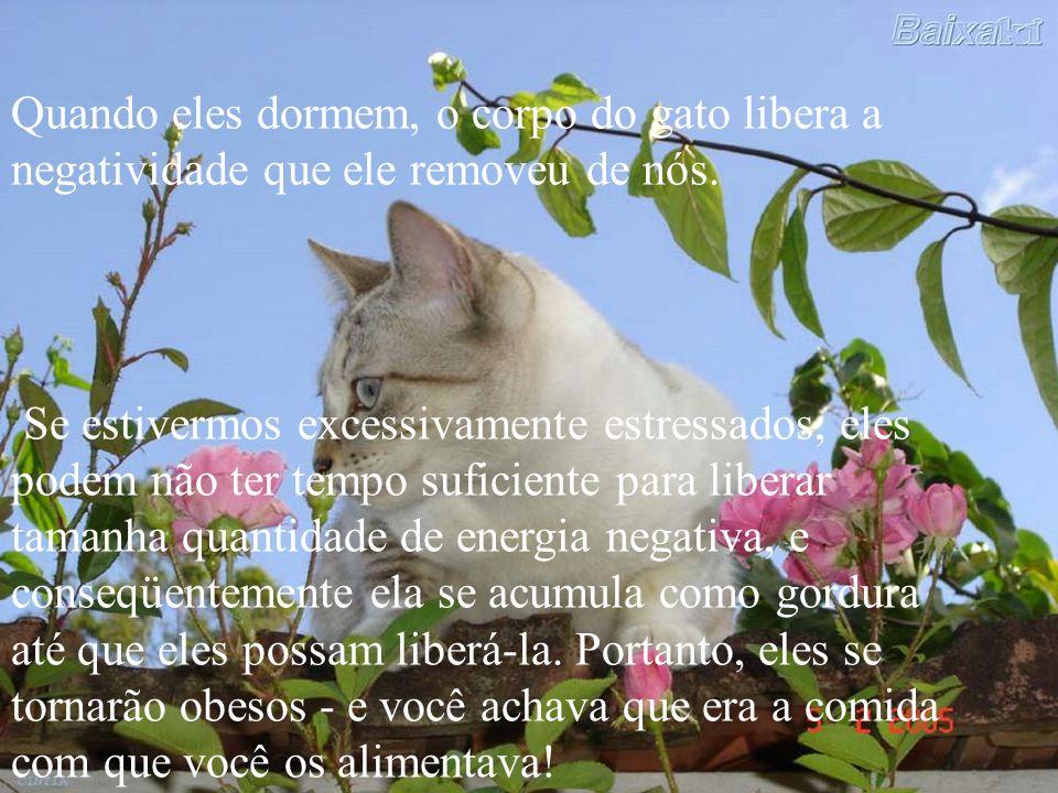 Quando eles dormem, o corpo do gato libera a negatividade que ele removeu de nós.