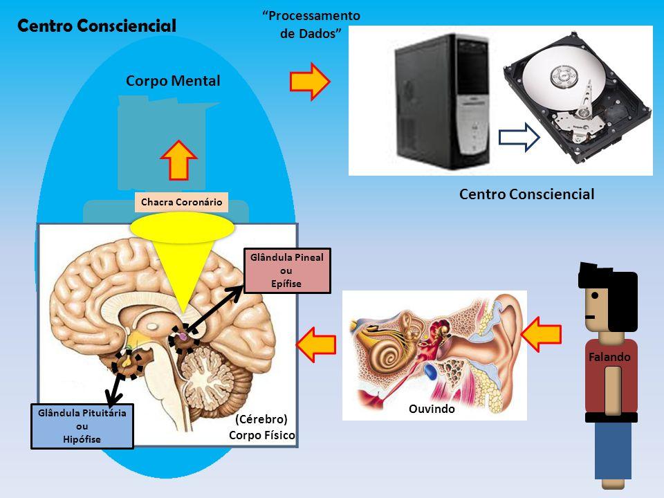Glândula Pineal ou Epífise Glândula Pituitária ou Hipófise Chacra Coronário Corpo Mental Processamento de Dados Centro Consciencial Ouvindo (Cérebro) Corpo Físico Falando