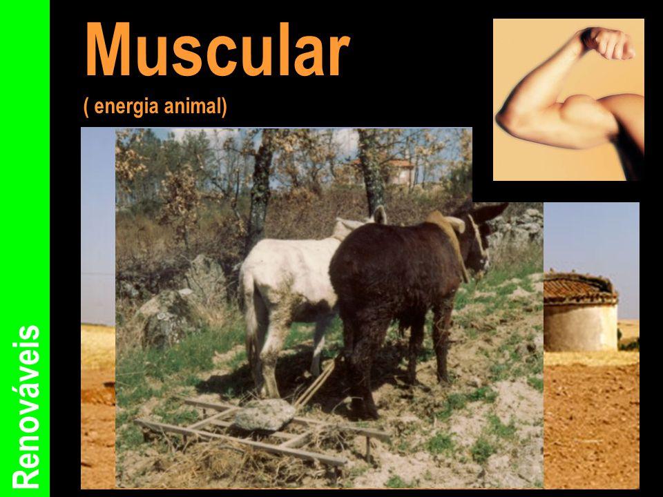 Renováveis Muscular ( energia animal)