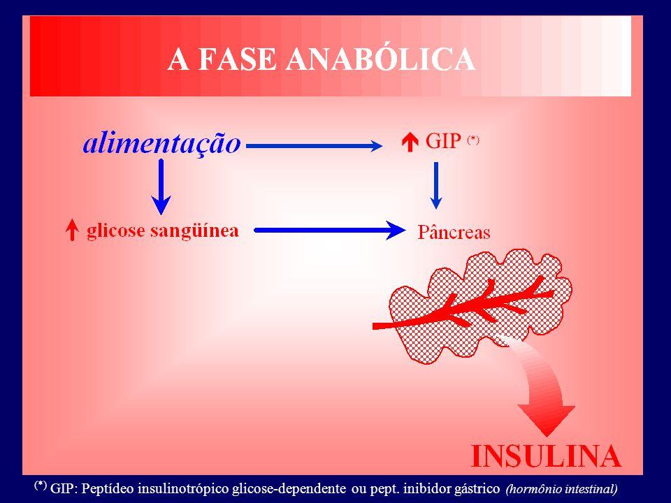  GIP (*) (*) GIP: Peptídeo insulinotrópico glicose-dependente ou pept. inibidor gástrico (hormônio intestinal)
