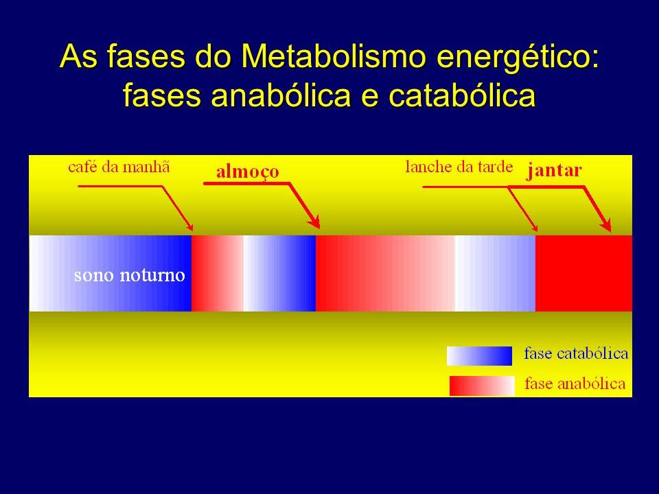 (aminoácidos) http://fisio.icb.usp.br/