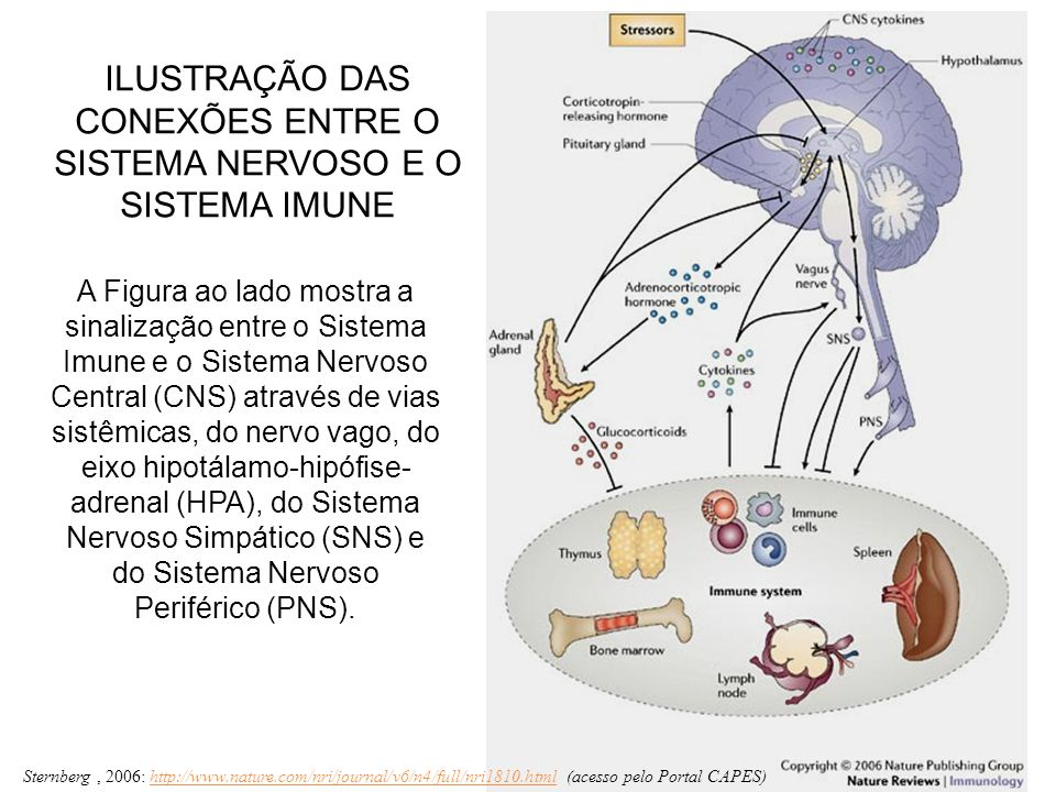 A Figura ao lado mostra a sinalização entre o Sistema Imune e o Sistema Nervoso Central (CNS) através de vias sistêmicas, do nervo vago, do eixo hipot