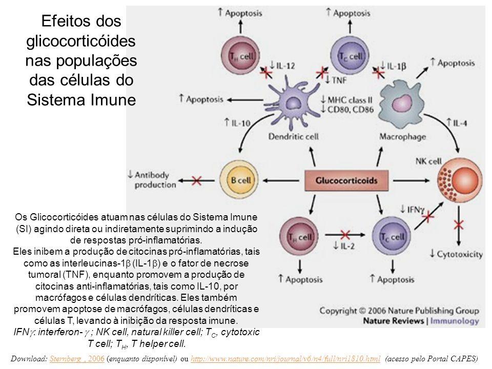 Efeitos dos glicocorticóides nas populações das células do Sistema Imune Os Glicocorticóides atuam nas células do Sistema Imune (SI) agindo direta ou