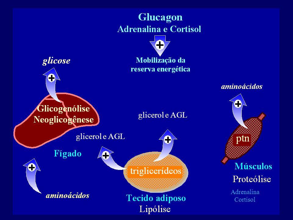 Adrenalina Cortisol glicerol e AGL aminoácidos