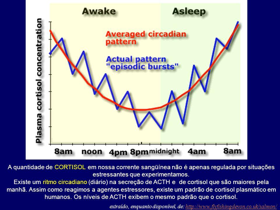 A quantidade de CORTISOL em nossa corrente sangüínea não é apenas regulada por situações estressantes que experimentamos. Existe um ritmo circadiano (
