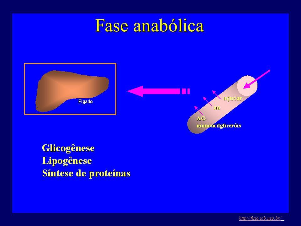 Fase anabólica