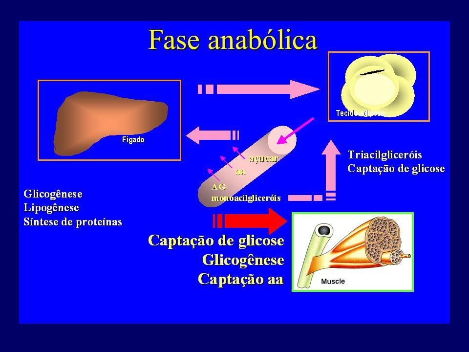 A Ilhota de Langerhans pancreática Células  Glucagon  Glicemia