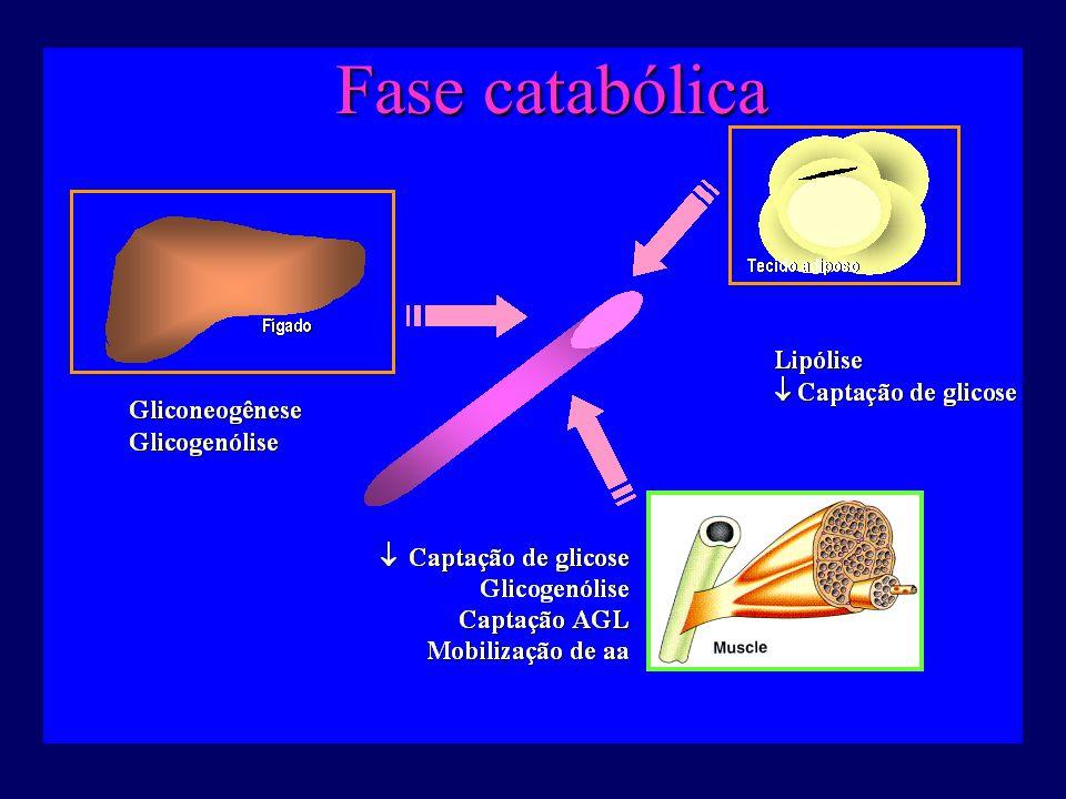 http://fisio.icb.usp.br/ Fase catabólica