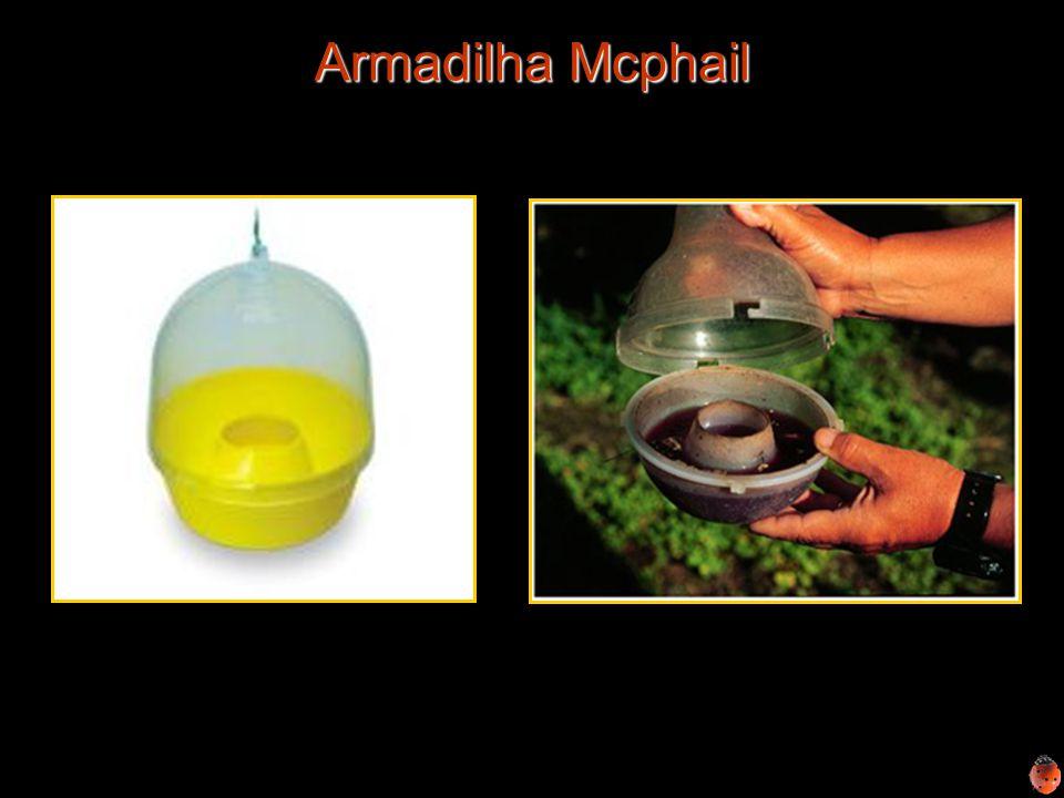 Armadilha Mcphail Armadilha Mcphail