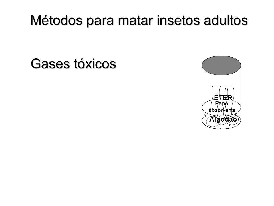 Algodão Métodos para matar insetos adultos Papel absorvente ÉTER Gases tóxicos