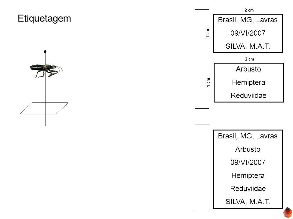 Etiquetagem Brasil, MG, Lavras 09/VI/2007 SILVA, M.A.T. 2 cm 1 cm Arbusto Hemiptera Reduviidae 2 cm 1 cm Brasil, MG, Lavras Arbusto 09/VI/2007 Hemipte