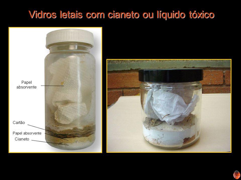 Vidros letais com cianeto ou líquido tóxico Papel absorvente Cartão Cianeto Papel absorvente