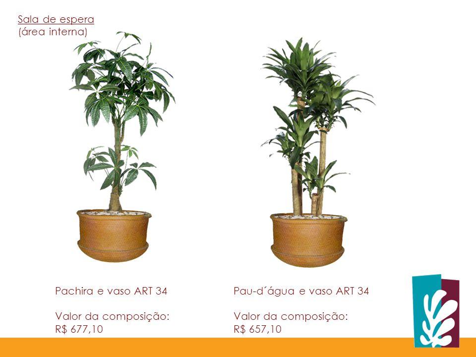 Pachira e vaso ART 34 Valor da composição: R$ 677,10 Pau-d´água e vaso ART 34 Valor da composição: R$ 657,10 Sala de espera (área interna)